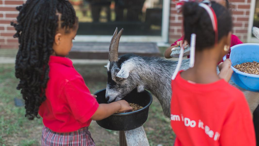 lha.slider.goats